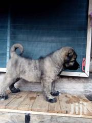 Caucasian Shepard Puppies | Dogs & Puppies for sale in Greater Accra, Airport Residential Area